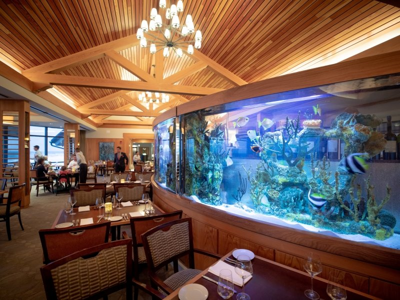 aquarium in the seahorse grille